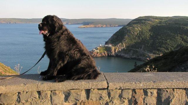 Смелый пёс на фоне залива