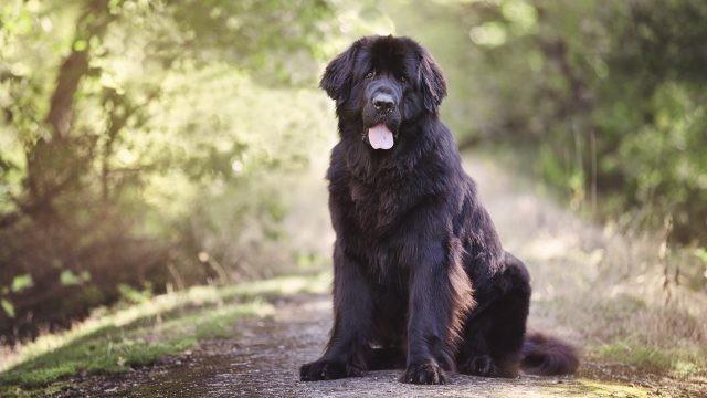 Собака сидит на тропинке в лесу