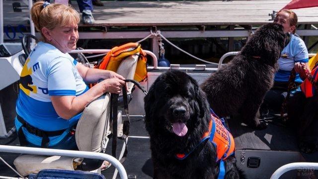 Женщины и ньюфаундленды в спасательном катере
