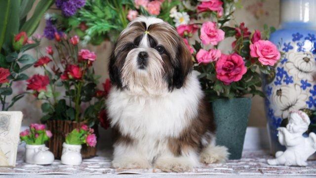 Собачка среди горшков с цветами
