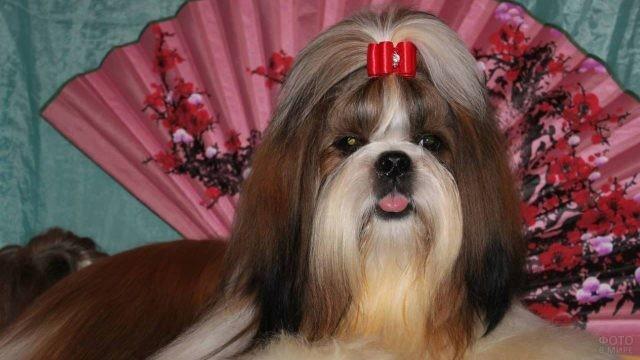Собака на фоне розового веера