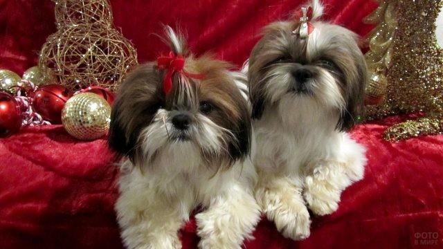 Собаки-хризантемы на красном диване с новогодними игрушками