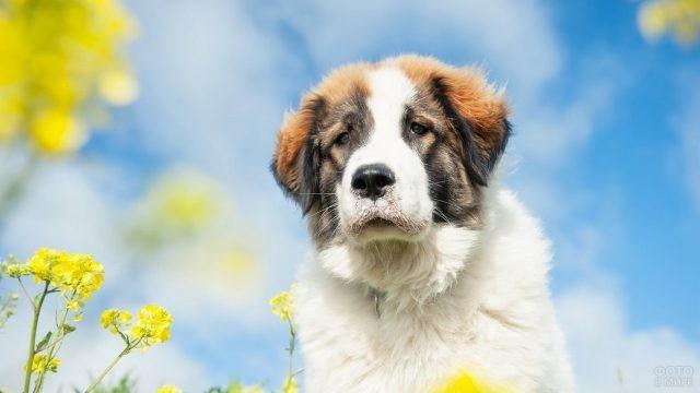 Грустный щенок с жёлтыми цветами на фоне неба