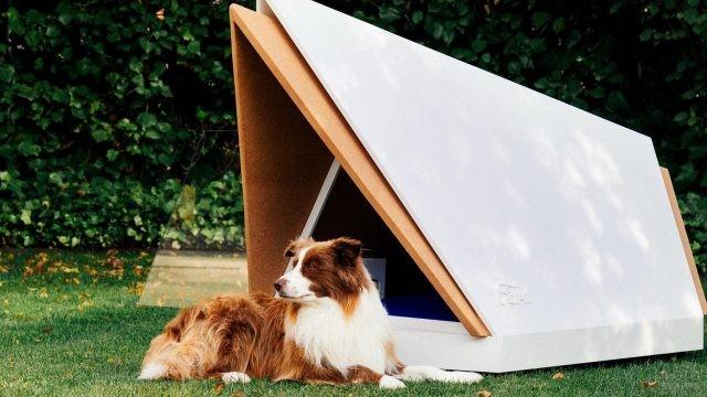 Бело-рыжая собака возле новейшей будки на газоне