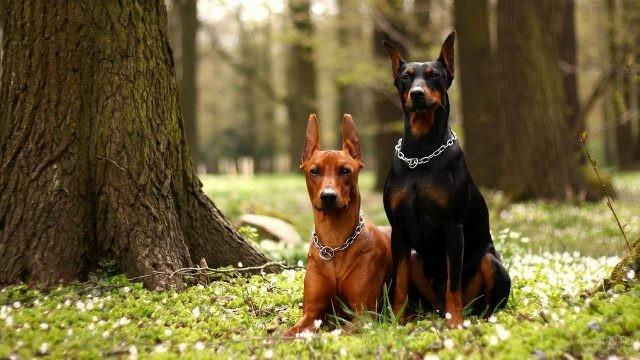 Породистые собаки среди деревьев в лесу