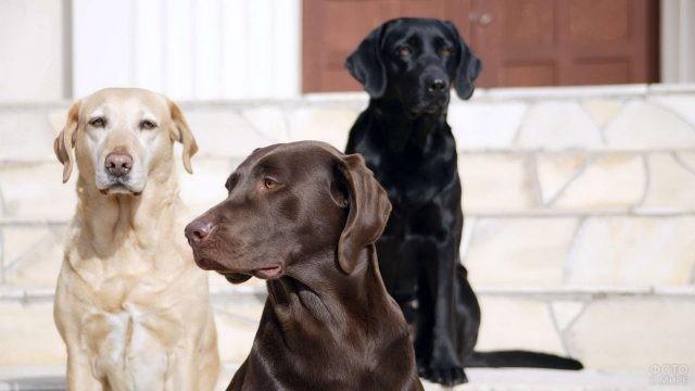 Сторожевые собаки на светлом крыльце