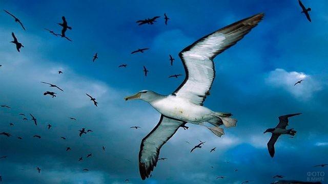 Стая альбатросов в небе