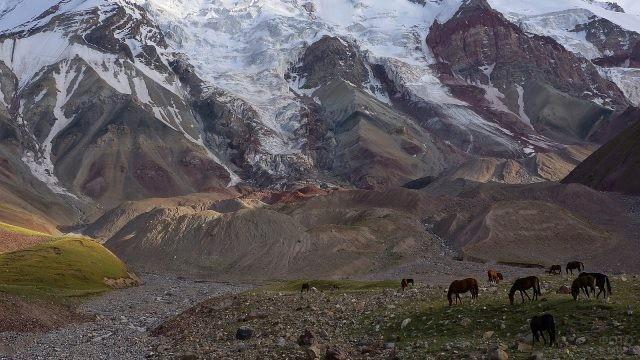 Дикие животные пасутся у подножия высоких гор