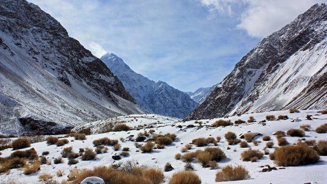 Маленькие кусты на заснеженных горах