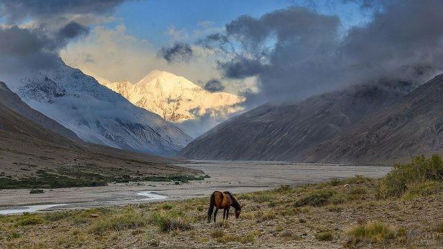 Одинокая лошадь пасётся на фоне Памирских гор