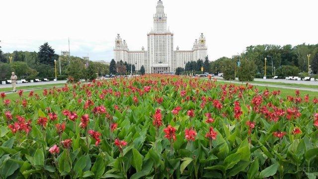 Клумба возле МГУ