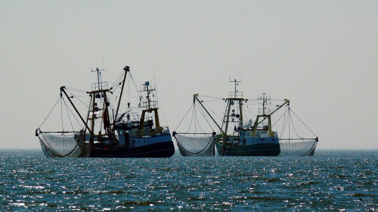 Два промысловых корабля в море