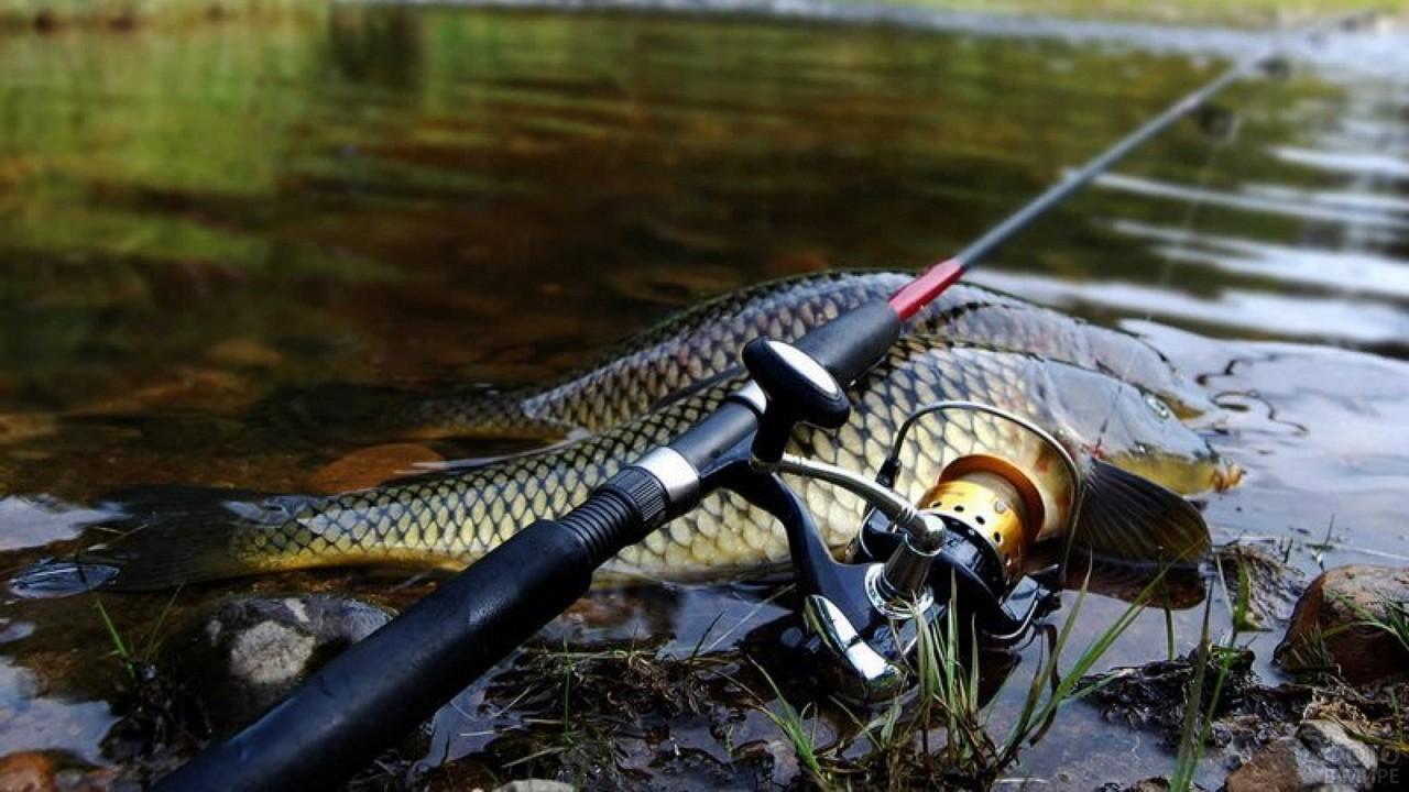 Улов рыбака и спиннинг