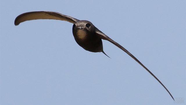 Морда стрижа во время полёта