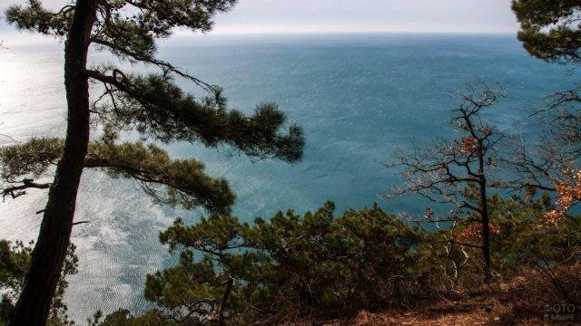 Сосновый лес на черноморском берегу