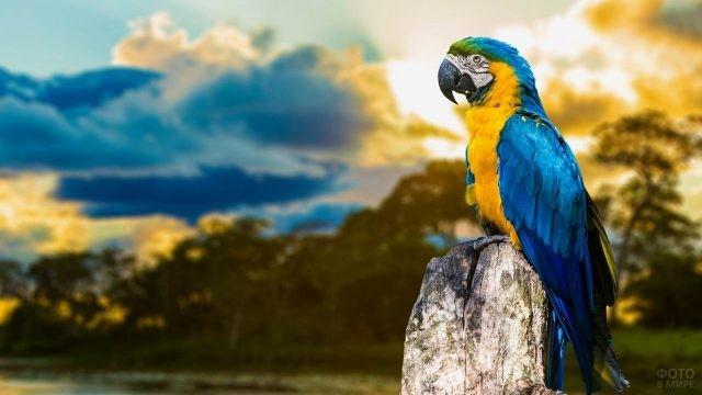 Попугай ара на фоне облаков