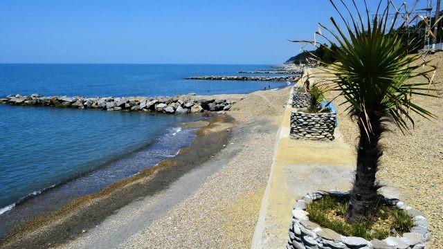 Пальмы и волнорезы на пляже Якорная щель