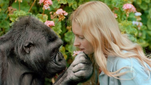 Обезьяна даёт девушке цветок