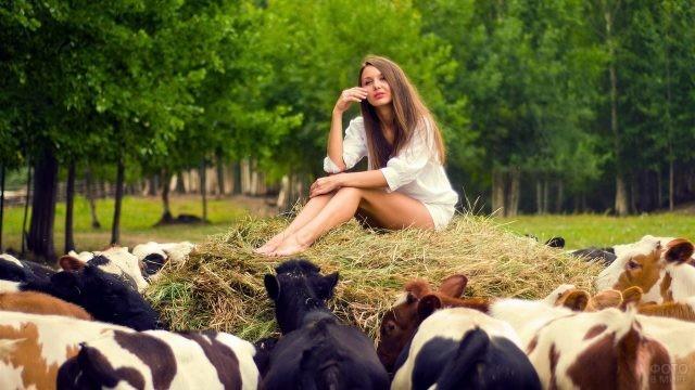 Шатенка сидит на стогу сена в окружении коров