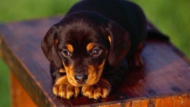 Трогательный щенок на деревянном сооружении
