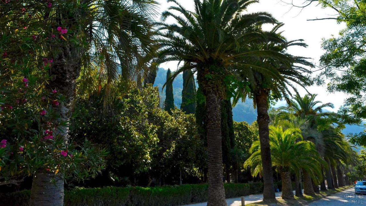 Тенистая пальмовая аллея