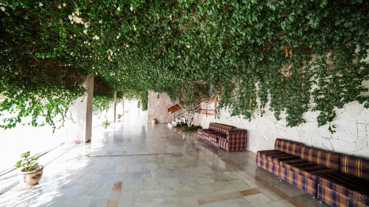 Зелень на потолке в фойе дома отдыха Псоу