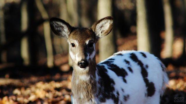 Необычный окрас животного оленьего типа