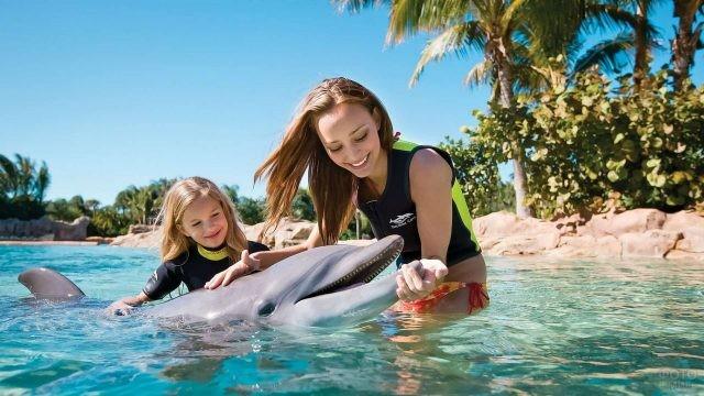 Девушка с девочкой гладят дельфина