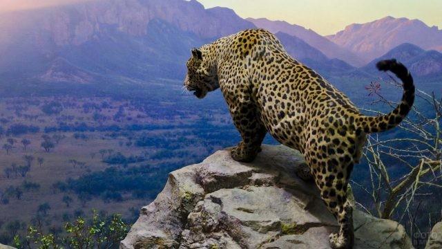 Ягуар на вершине скалы
