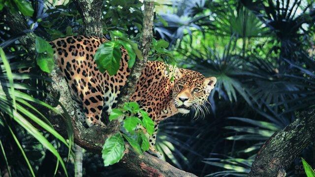 Крупный хищник в густых джунглях