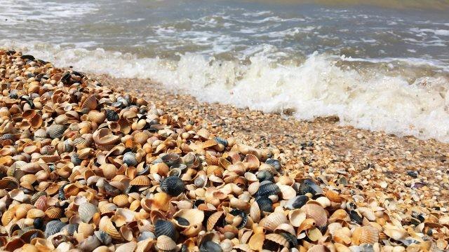 Ракушечный пляж в Должанской