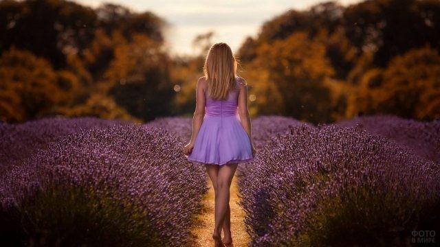 Девушка идёт по тропинке между лиловых цветов