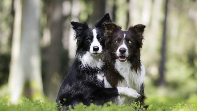 Дружные собаки обнимаются на природе