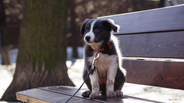 Грязный щенок на поводке на деревянной скамейке