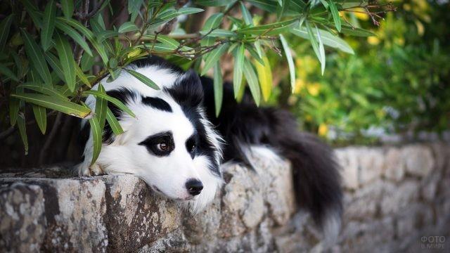 Хитрая собака спряталась под кустом