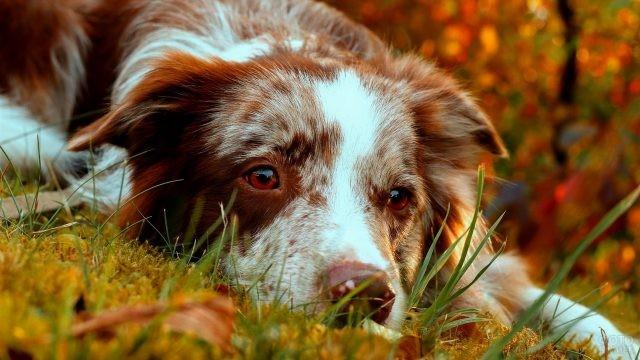 Кареглазая собака на земле в осеннем лесу