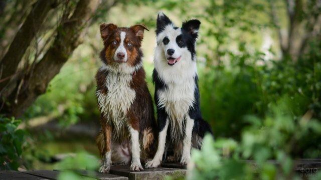Мокрые собаки на деревянной лавке на природе