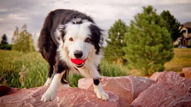 Озорной пёс на камнях с мячиком в зубах