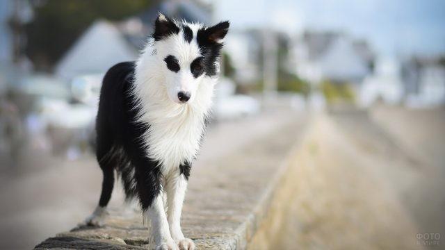 Скромная собака стоит на бордюре