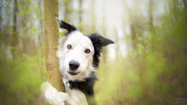 Смешная собака обнимает деревце