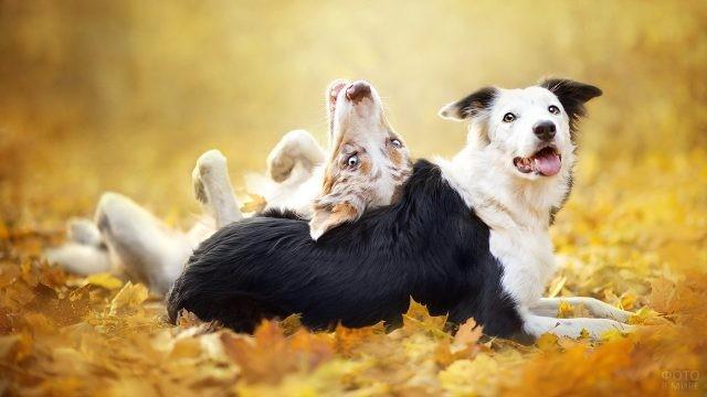 Смешные собаки балуются в осенней листве