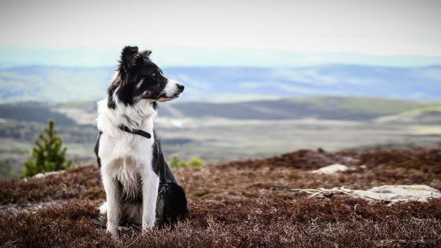 Собака смотрит в сторону на равнине в горах