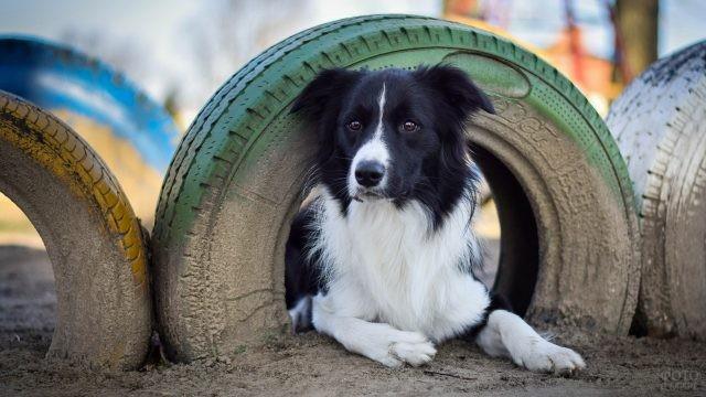 Собака залезла в вертикально стоящее колесо