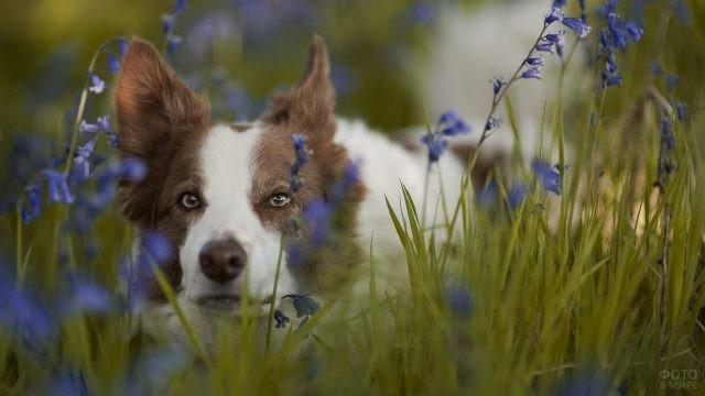 Внимательный пёс выглядывает из-под колокольчиков