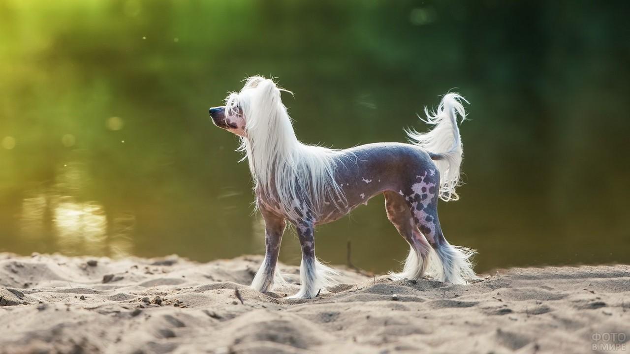 Красивая стойка собаки на песке у водоёма
