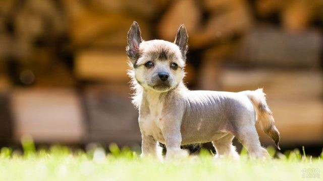Милый щенок смотрит уверенно