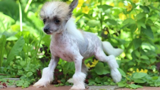 Молодой пёс в саду