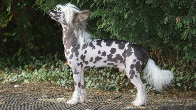 Пятнистая собака на фоне деревьев