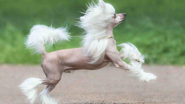 Стройная собачка в прыжке на тротуаре