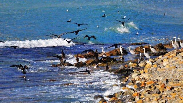 Перелётные птицы на осеннем побережье